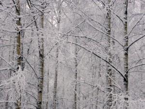vinter_02