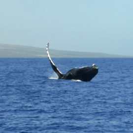 Whalewhatching