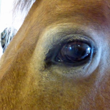 Paisan – a very special horse