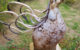 Skulptur av en guldfärgad enhörning