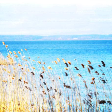 Canvastavla vass vid sjön Roxen