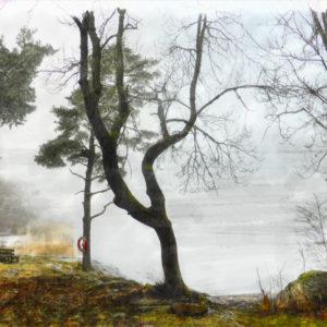 Canvastavla träd vid sjön Roxen