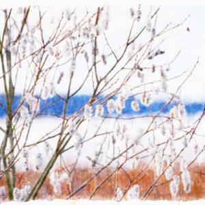 Canvastavla sälg vid sjön Roxen