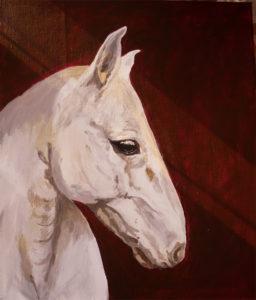 Porträtt av vitt hästhuvud